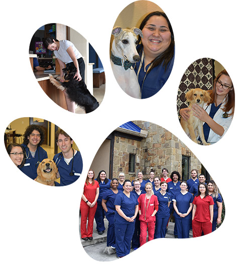 Bingle Vet Clinics Support Team